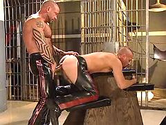Fetish slave doggy getting pumped hard from behind