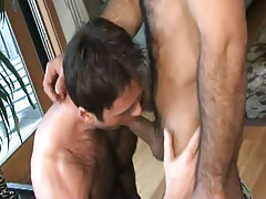 Hairy gay sucks appetizing cock
