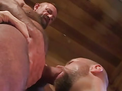 Old hairy gay sucked by bear man